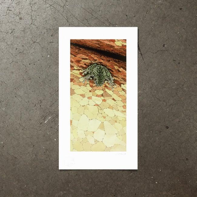 Image of Torrent Frog - Art Print