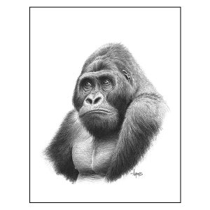 "Image of ""Mountain Gorilla"" Print"