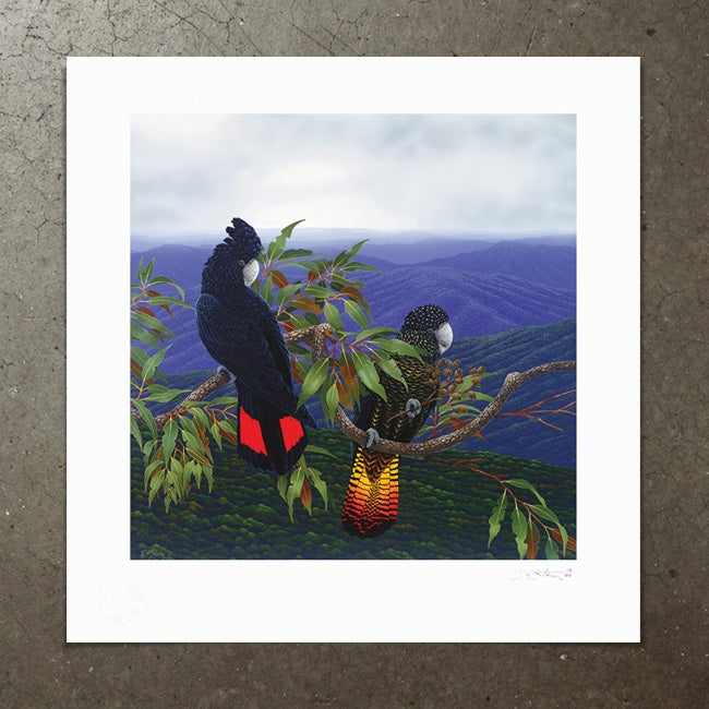 Image of Red Tailed Black Cockatoos - Art Print