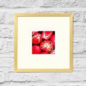 Image of Dysoxylum Arborescens - Framed Print