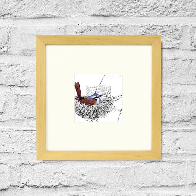 Image of Grey Headed Robin - Framed Print