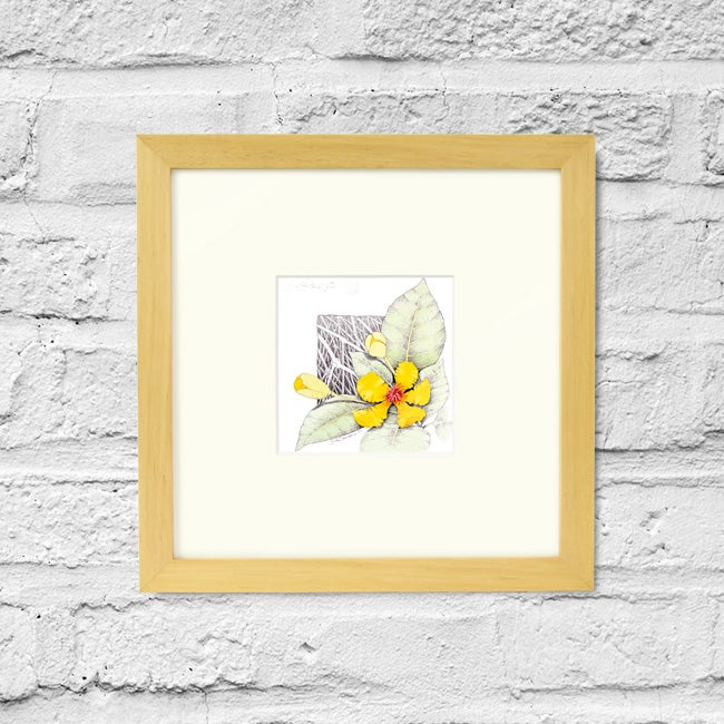 Image of Dillenia Alata - Framed Print