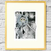 Image of Owl Study - Framed Print