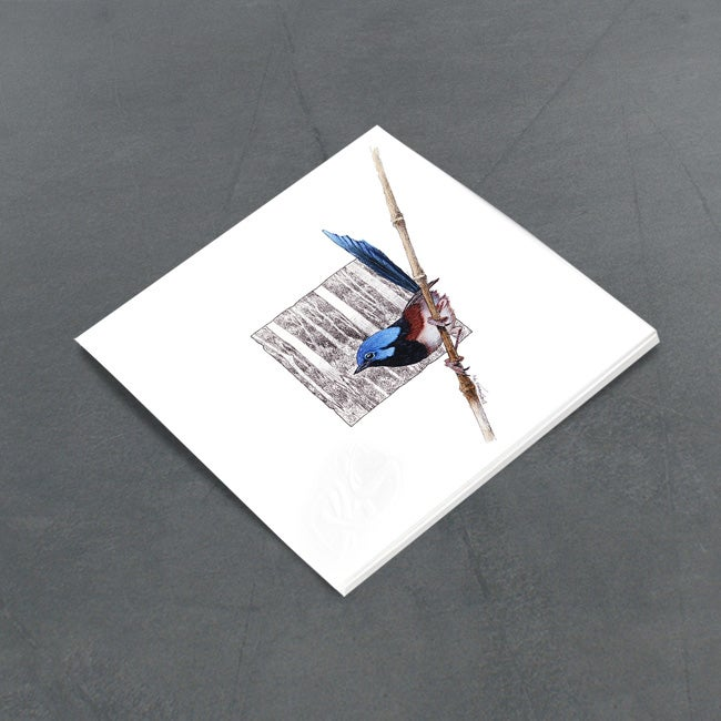 Image of Lovely Fairy Wren - Miniature