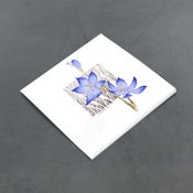 Image of Scented Sun Orchid - Miniature
