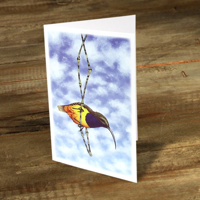 Image of Where to From Here (Sunbird) - Gift Card