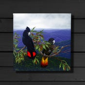 Image of Red Tailed Black Cockatoos - Canvas Print