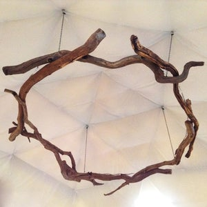 Image of fforest heartwood halo