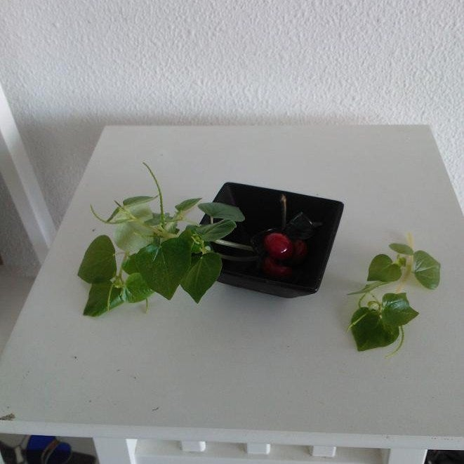 Small Square Flower Dish