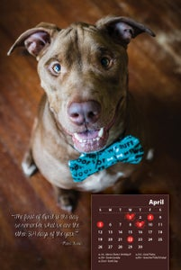 Image of Collectible 2015 Destiny the Pibble Calendar