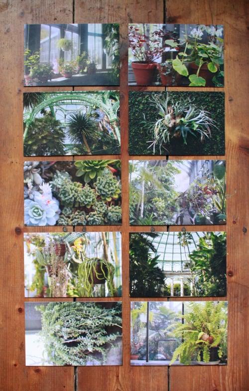 Image of Postcard set 'Botanical series'