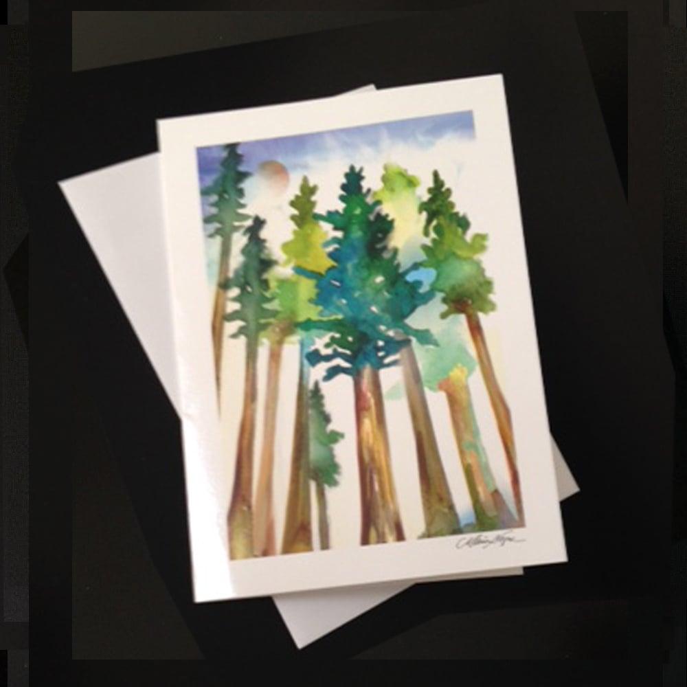 Next Prev Image Of Redwoods 5 Pack Greeting Card Set