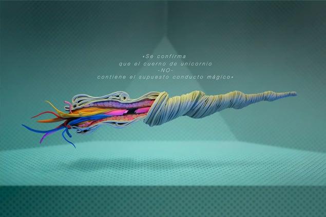 """Image of """"Se confirma que el cuerno de unicornio NO contiene el supuesto conducto mágico"""""""