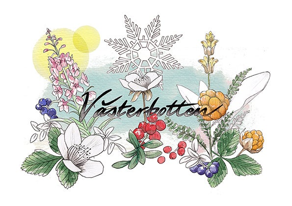 Image of Västerbotten - Limited Edition A3 Print