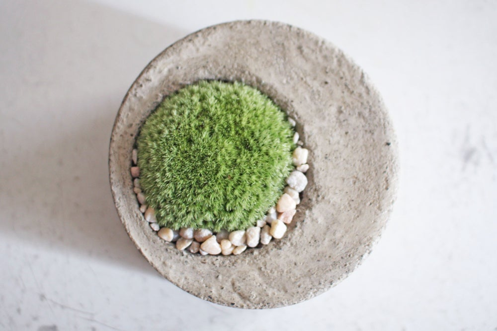 Image of moss planter