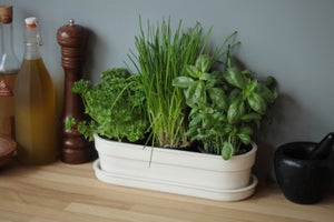 Image of Herbivore Indoor Planter