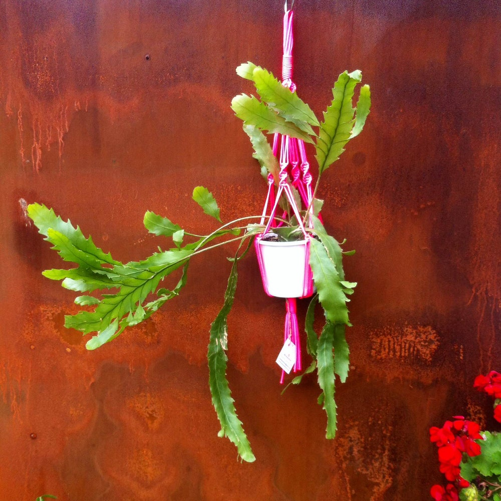 Image of Small Macrame Plant Hangers