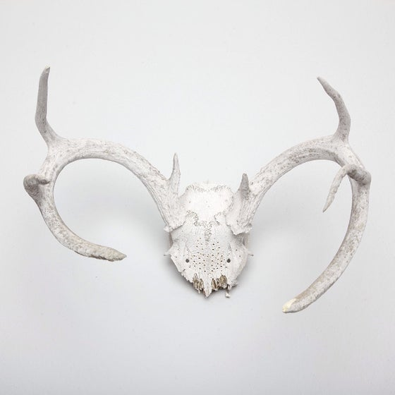 Image of HAND CARVED SKULL // TAURUS