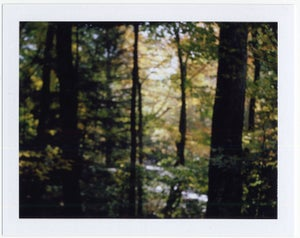 Image of Yellow Through the Forest