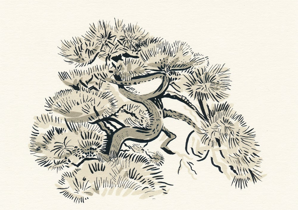 Image of Tokyo Pine screen print
