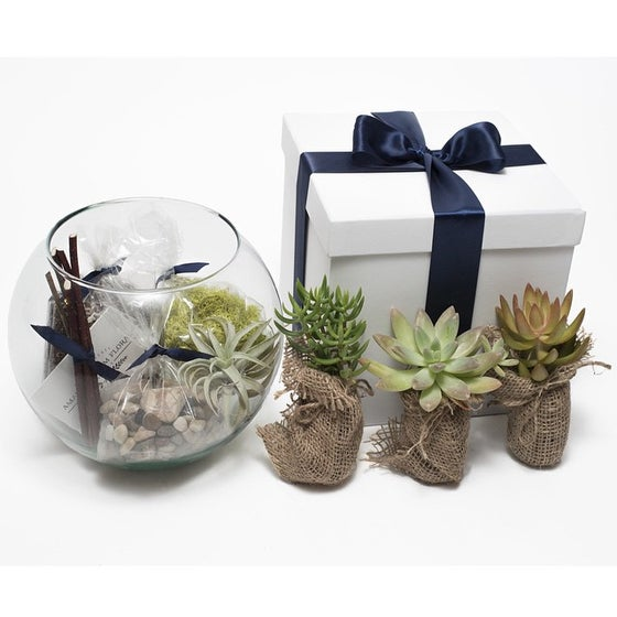 Image of TERRARIUM KIT