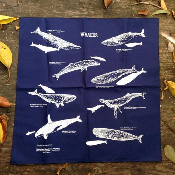 Image of Whale Bandana