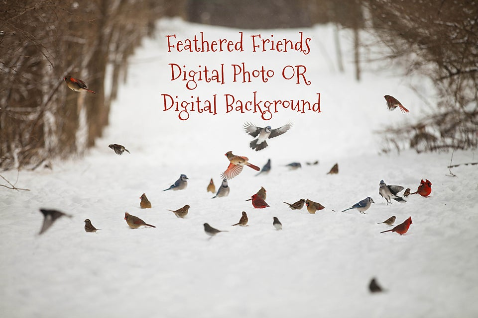 Image of Feathered Friends Digital Background