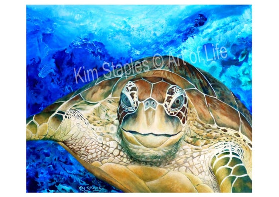 Image of Turtle amongst the reef - PRINT