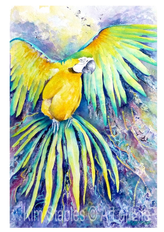 Image of Macaw in flight - PRINT