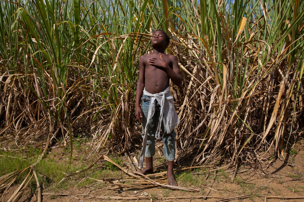 Image of Boy in Sugar Cane Field