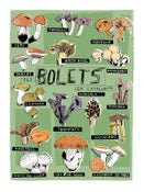 Image of BOLETS - MUSHROOMS - SOUVENIR DE BARCELONA POSTER