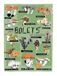 Image of BOLETS - MUSHROOMS - SOUVENIR DE BARCELONA POSTER