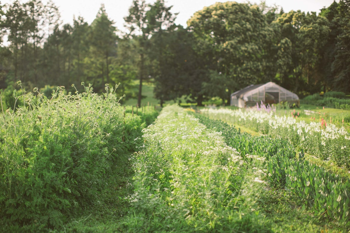 Image of MASTER CLASS :: FLOWER FARMING 101