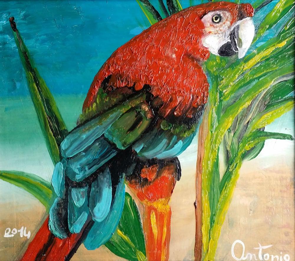 Image of pappagallo vivente