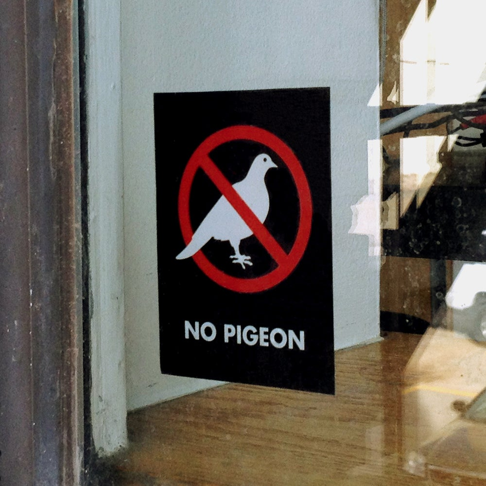 Image of No Pigeon Window Cling