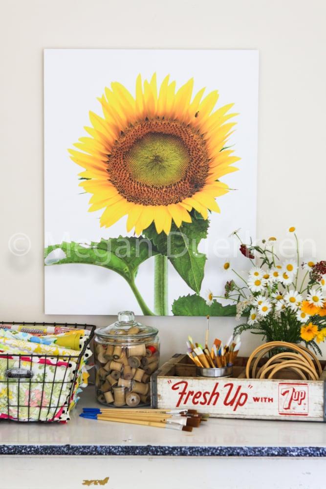 Image of Sunflower on White Sky Print