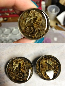 "Image of Real Seahorse Plugs (sizes 1""-2"")"