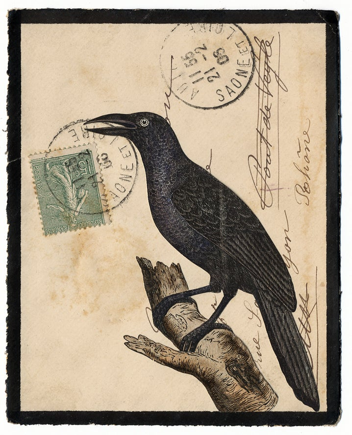 Image of Collage 007: Corvid 1908