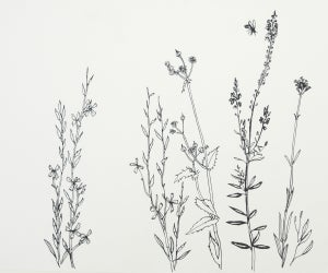 Image of Wiltshire weeds