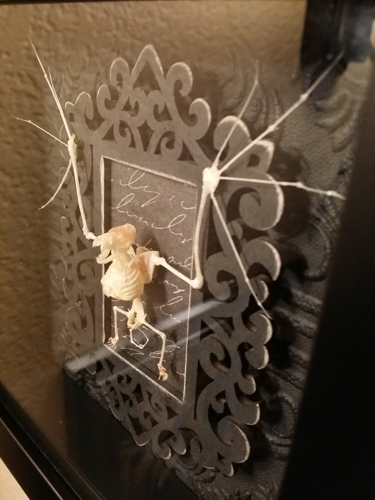 Image of 6x6 bat skeleton shadowbox