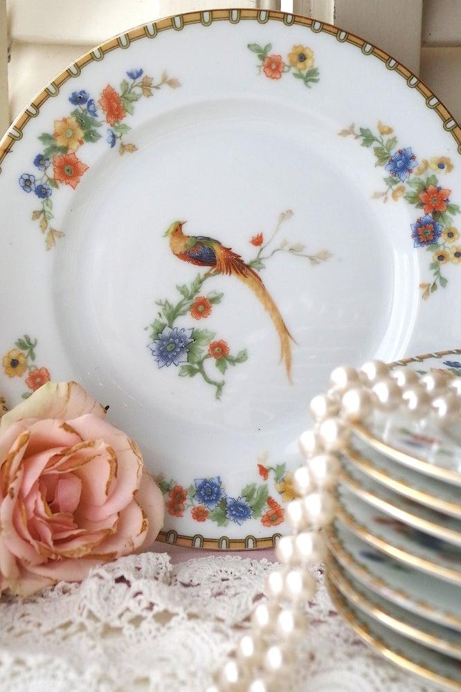 Image of oiseaux exotiques