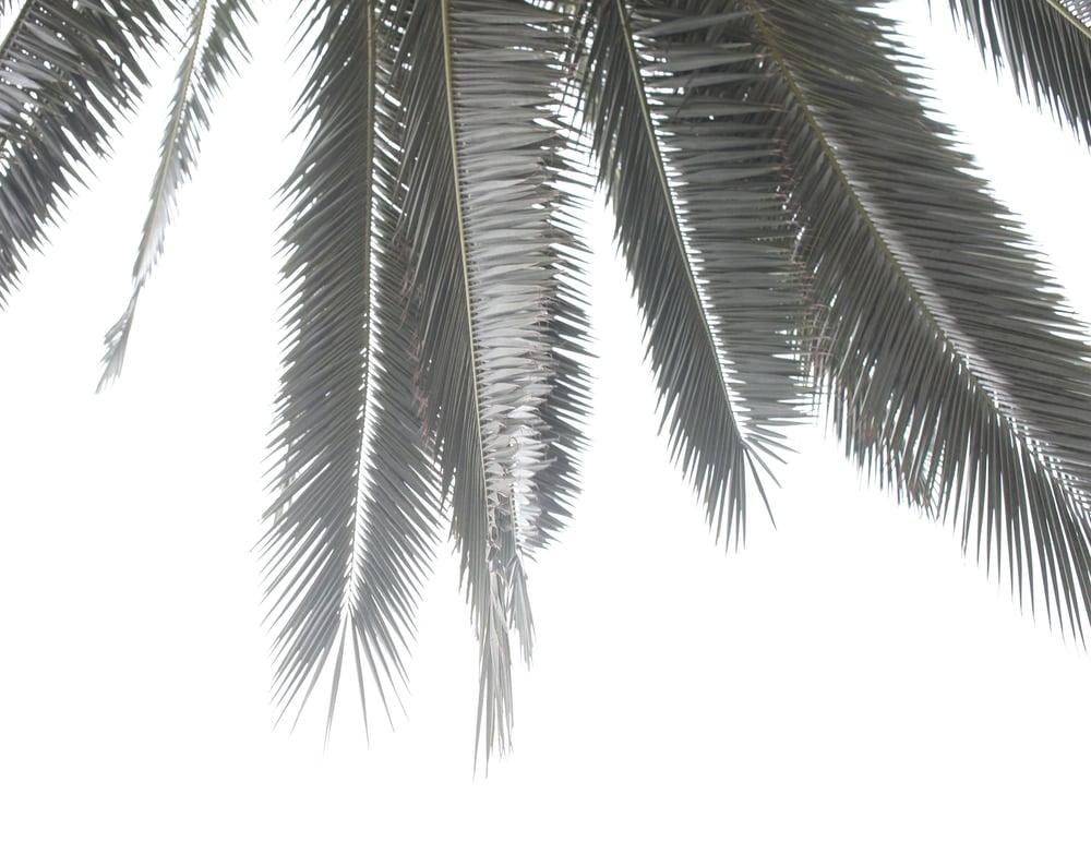 Image of Palm II