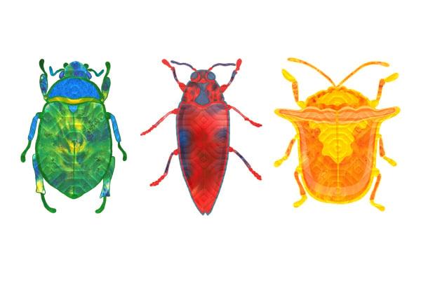 Image of Beetle Portraits