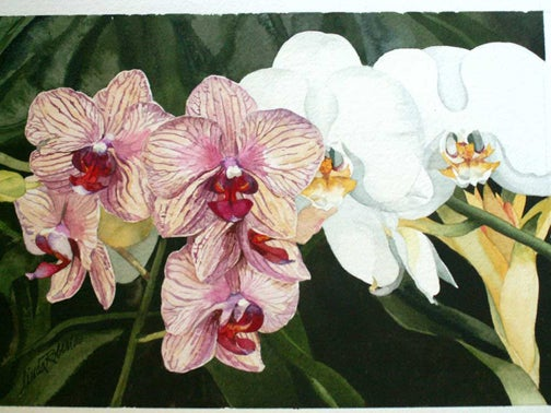 Image of Only Orchids giclee