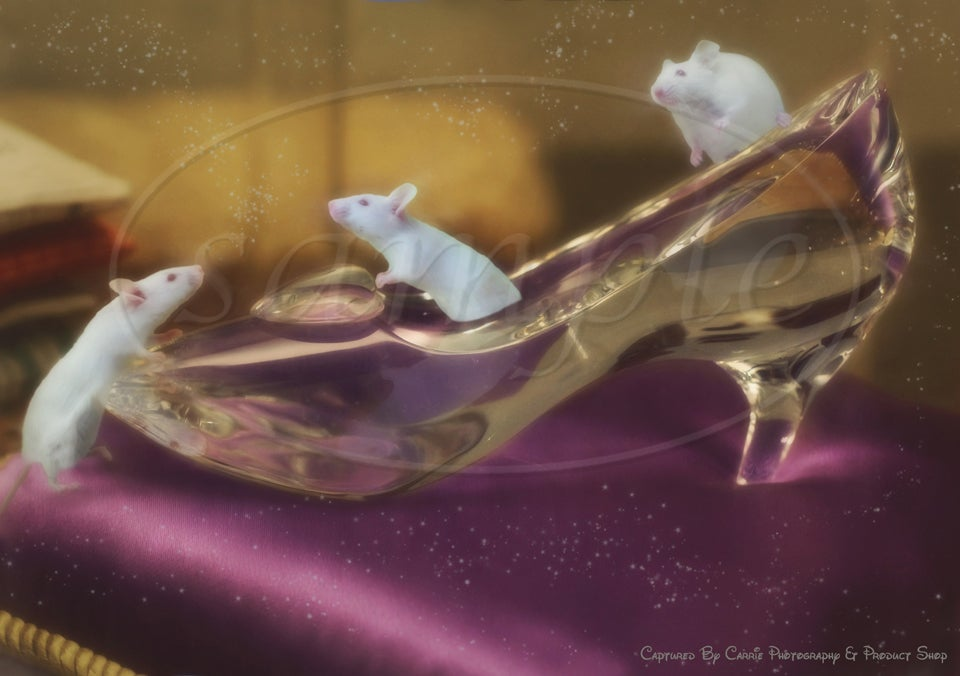Image of Glass Slipper Overlays