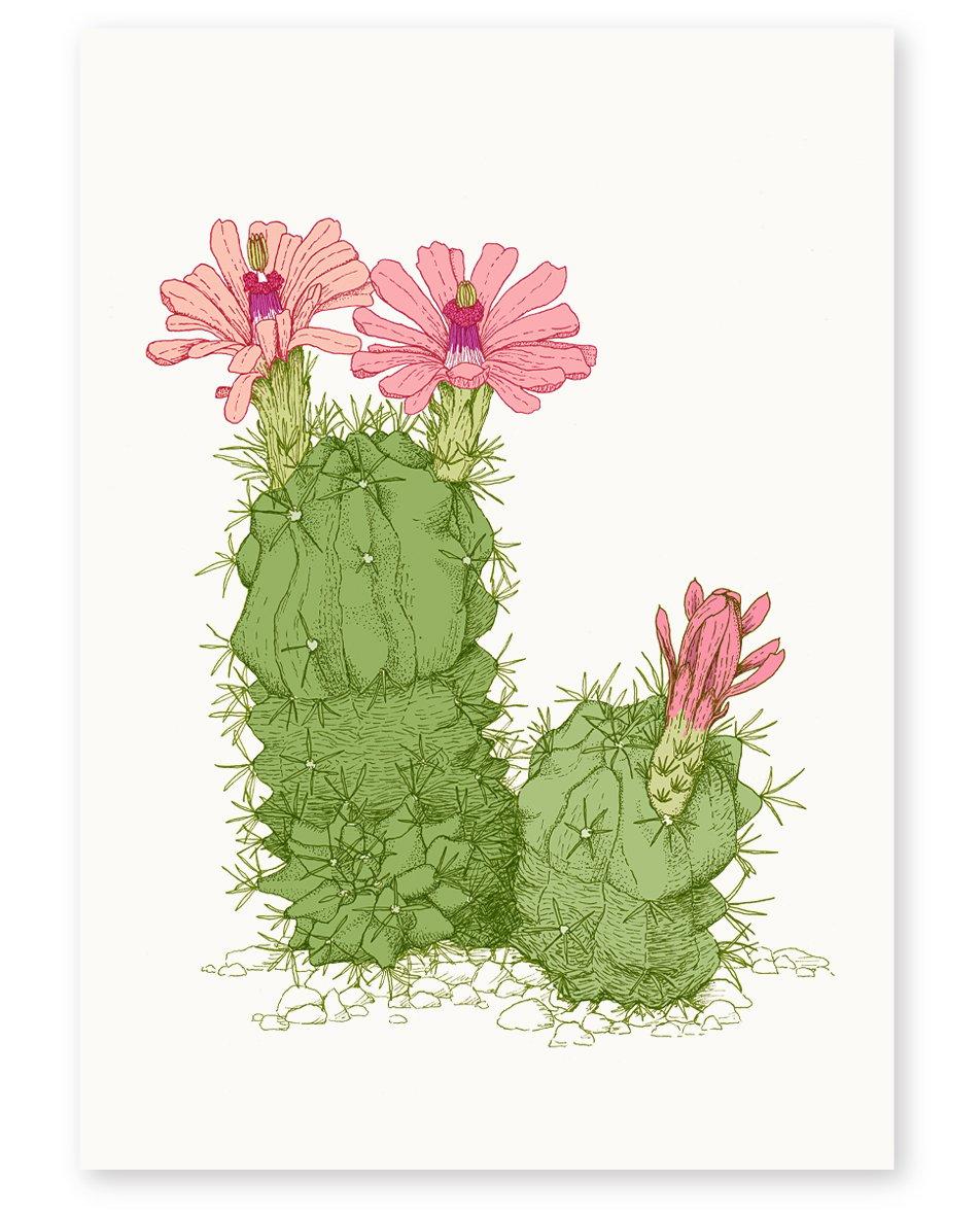 Image of 'Desert Flower' Limited Edition Art Print