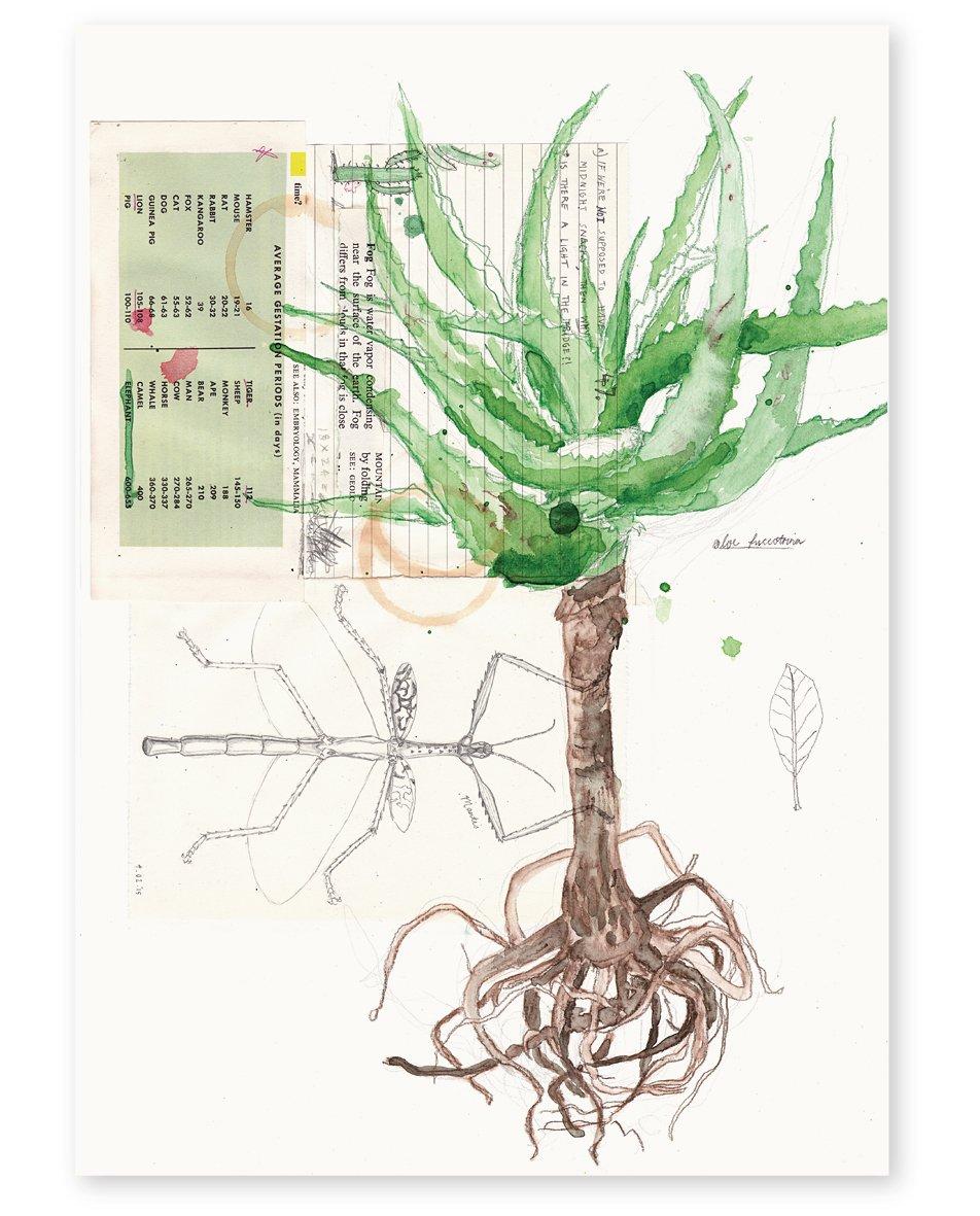 Image of 'Succulent' Art Print