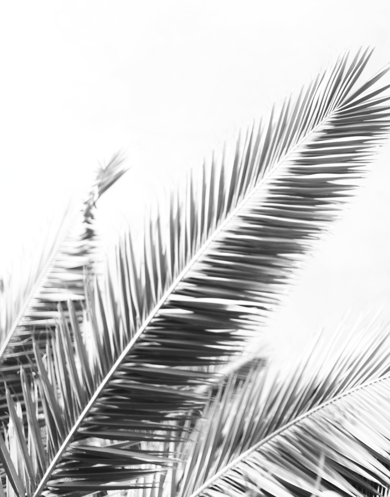 Image of Palm