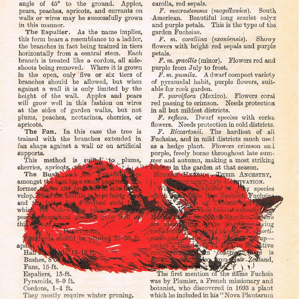 Image of PAGES, CURLED FOX