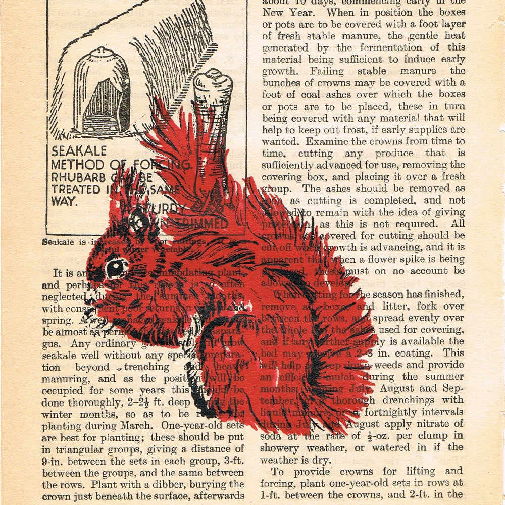 Image of PAGES SQUIRREL